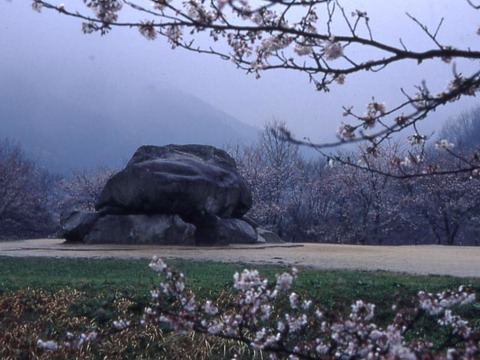石舞台 桜
