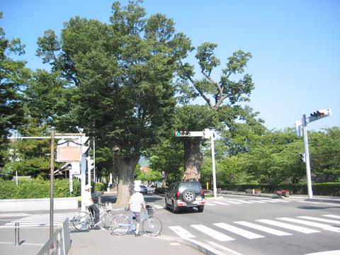 松本城北側並木道
