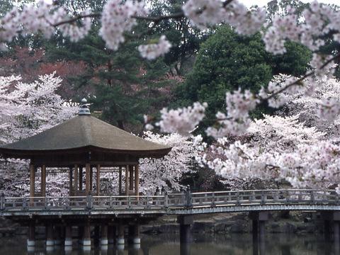 浮見堂 桜