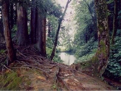 杜々の森の原生林