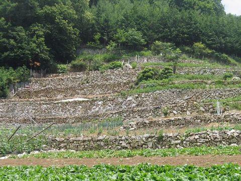 石垣の段々畑(芦川村)