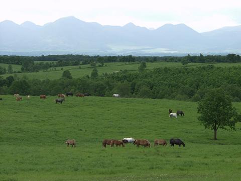 家畜改良センター十勝牧場