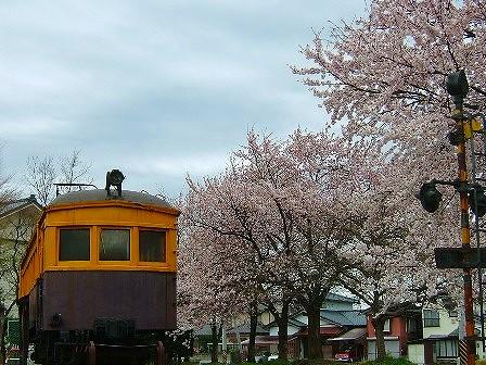 村松公園桜