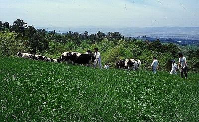 長岡市営牧場