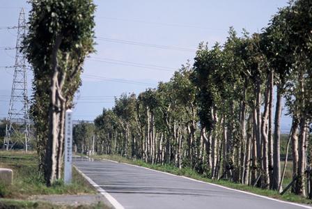 満願寺稲架木並木