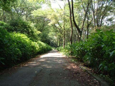府民の森(ぬかた園地)