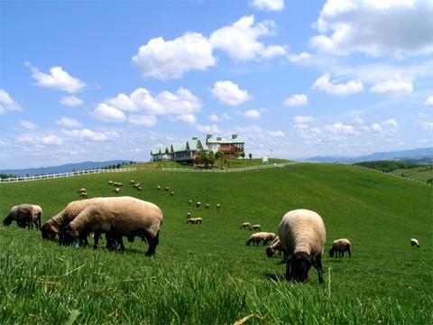 Hitsuji-to-Kumo-no-Oka Sheep Park