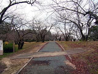 雑木林のような公園