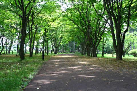 Miharashi Park