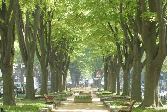 Jozenji Avenue