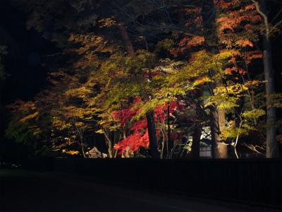 武家屋敷通り 紅葉ライトアップ