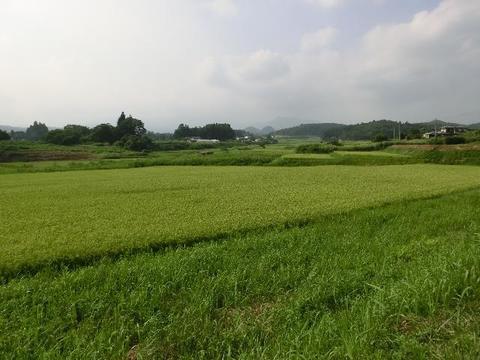 田園風景(仙台市泉区根白石)
