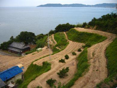 庵治町 海辺の段々畑