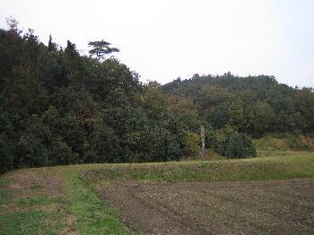 富田神社付近の田園風景