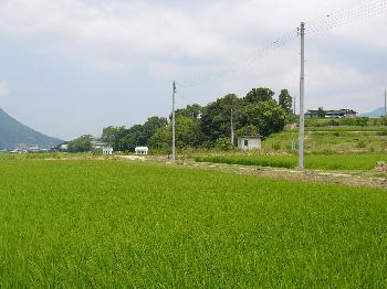 大窪池付近の田園風景
