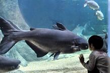 世界淡水魚水族館