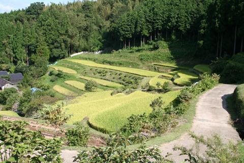 大垣内の田
